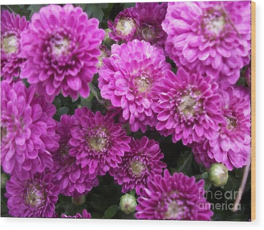 Purple Chrysanthemums Print Wood Print