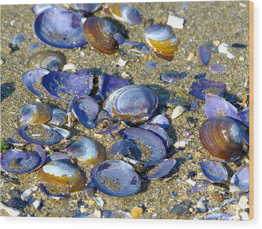 Purple Clam Shells On A Beach Wood Print