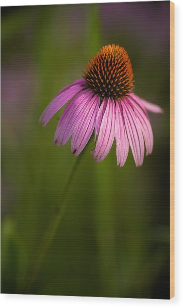 Purple Cone Flower Portrait Wood Print