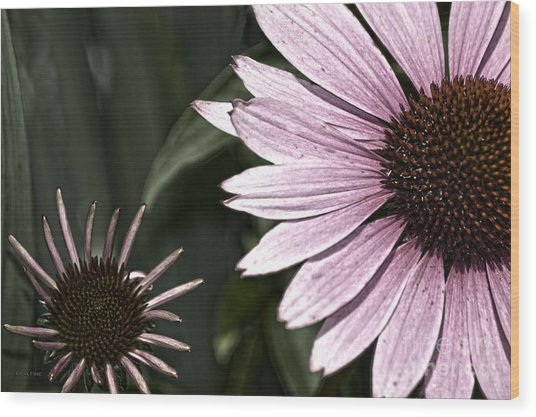 Purple Coneflower Imperfection Wood Print