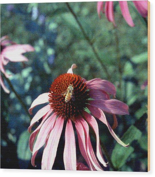Purple Echinacea Wood Print