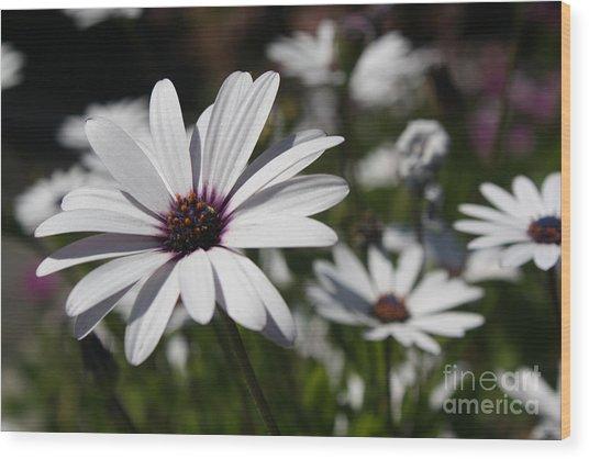 Purple Daisies 2 Wood Print