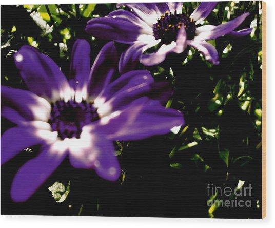 Purple Daze Wood Print