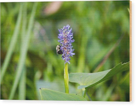 Purple Flower And Bee Wood Print