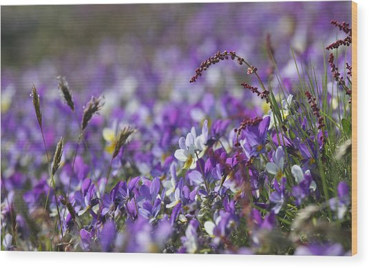 Purple Flower Bed Wood Print