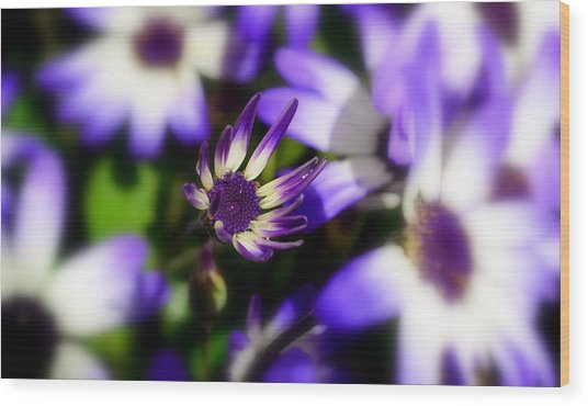 Purple Flowers Wood Print by Barbara Walsh