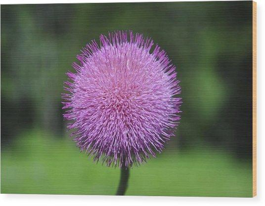 Purple Fuzz Wood Print