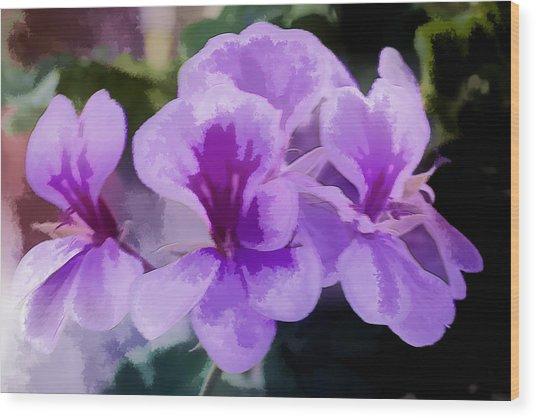 Purple Geraniums  Wood Print