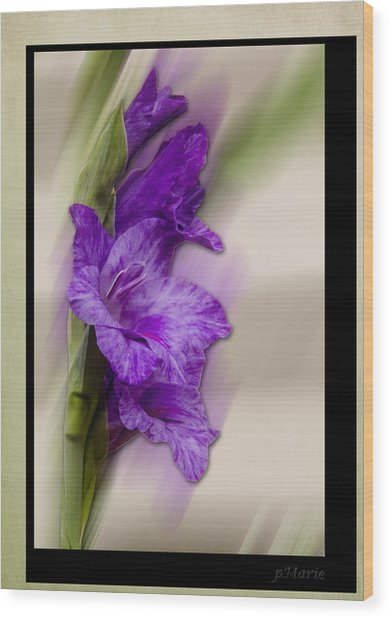 Purple Gladiolus Bloom Wood Print