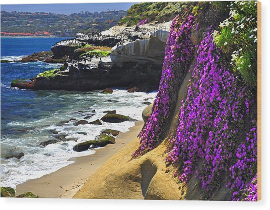 Purple Glory At La Jolla Cove Wood Print