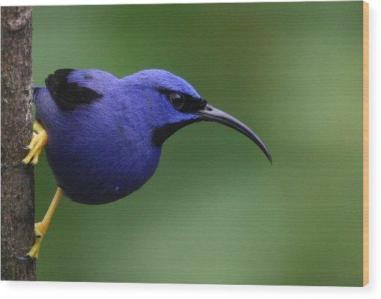 Purple Honeycreeper Wood Print by Joe Sweeney