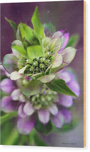 Purple Horsemint Wildflower Wood Print