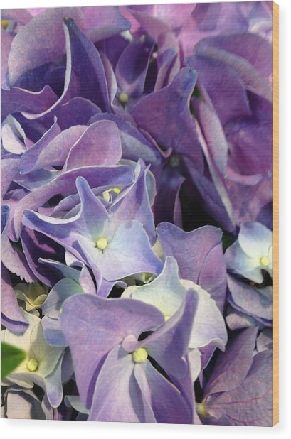 Purple Hydrangeas Wood Print