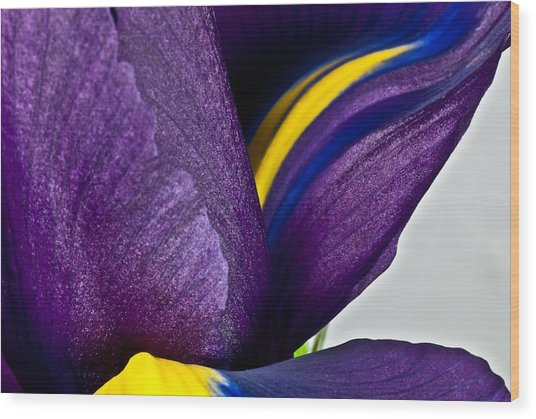 Purple Iris  #2 2010 Wood Print