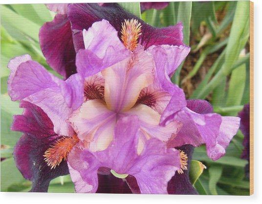 Purple Iris Wood Print by Virginia Forbes