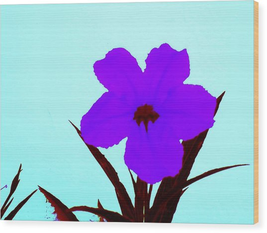 Purple Jack Flower Wood Print