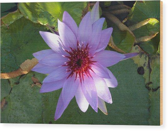 Purple Lily Wood Print by Jose Rodriguez