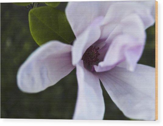 Purple Lily Magnolia Bloom Wood Print