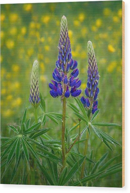 Purple Lupines Wood Print