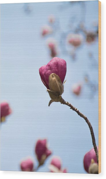 Purple Magnolia Single Wood Print by Priyanka Ravi