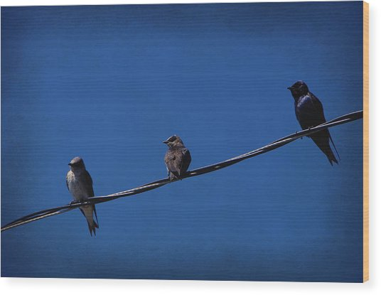 Purple Martin Trio Wood Print
