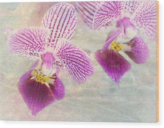 Purple Orchid 2 Wood Print