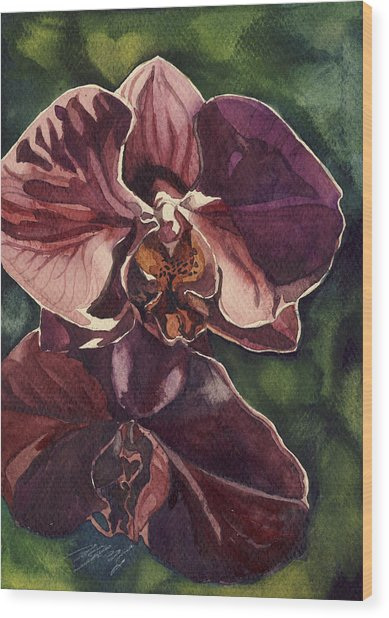 Purple Orchid  Wood Print by Alfred Ng