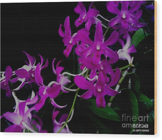 Purple Orchid Flower By Saribelle Rodriguez Wood Print