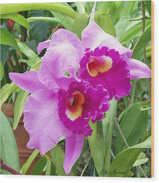 Purple Cattleya Orchids Wood Print