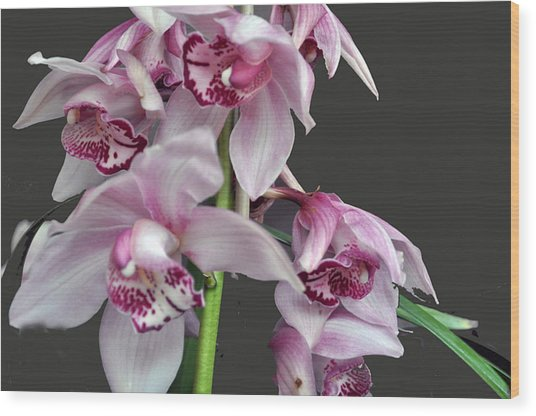 Purple Orchids Wood Print by Judith Russell-Tooth