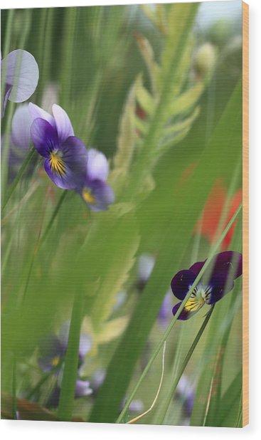 Purple Pansies Wood Print