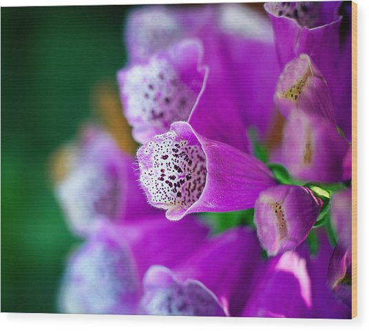 Purple Passion Wood Print by Tammy Smith