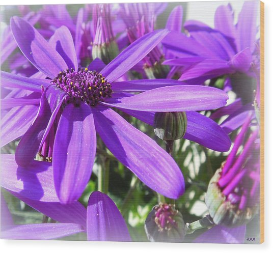 Purple Petals Wood Print