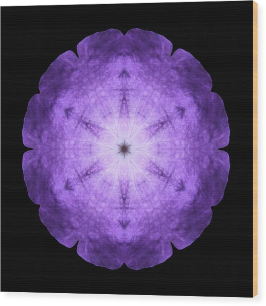 Purple Petunia I Flower Mandala Wood Print