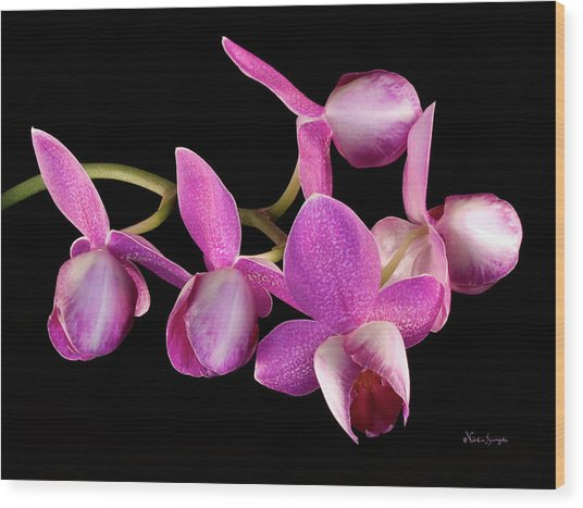 Purple Phal Wood Print