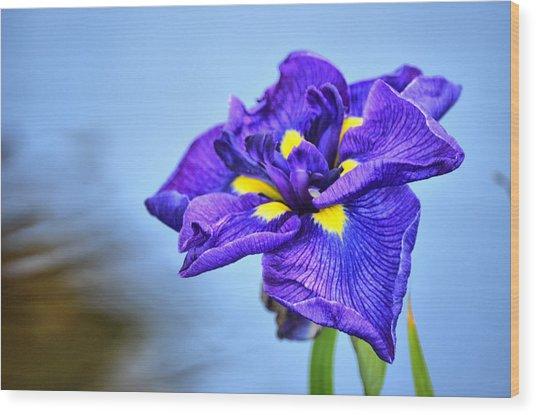 Purple Pond Iris Wood Print
