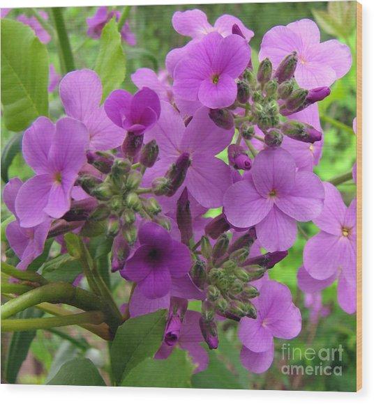 Purple Popping 1 Wood Print by Cedric Hampton