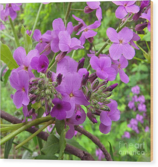 Purple Popping 2 Wood Print by Cedric Hampton