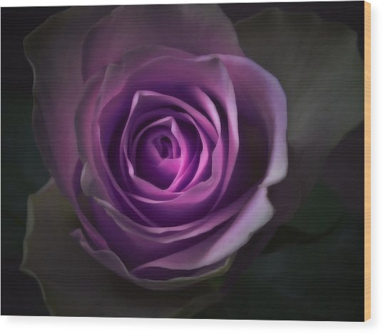 Purple Rose Flower - Macro Flower Photograph Wood Print by Artecco Fine Art Photography