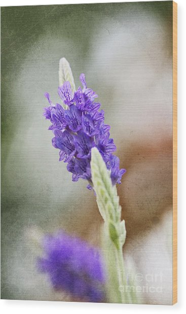 Purple Sage Texture Wood Print by Pamela Gail Torres