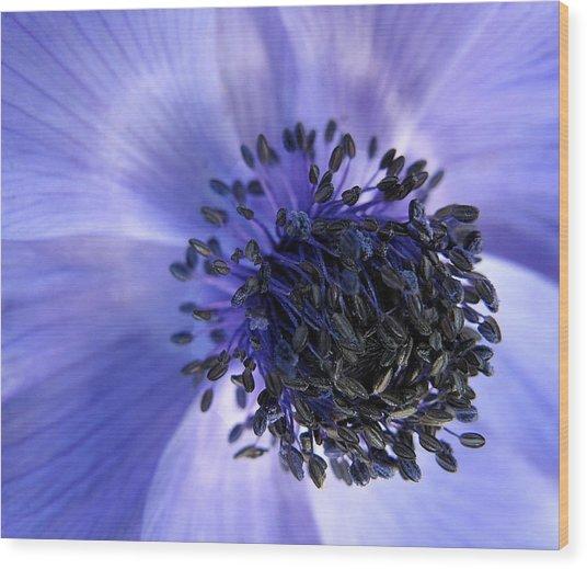 Purple Seed Haze Wood Print