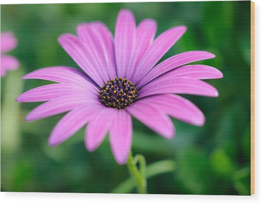 Purple Smile Wood Print by Ivelin Donchev