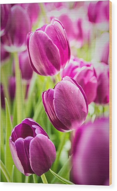 Purple Tulip Garden Wood Print