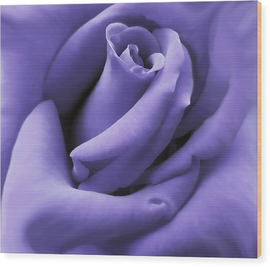 Purple Velvet Rose Flower Wood Print