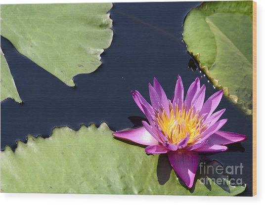 Purple Waterlilly Wood Print