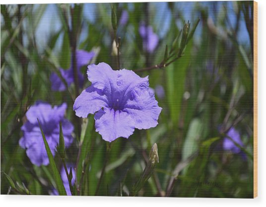 Purple Wild Flower Wood Print