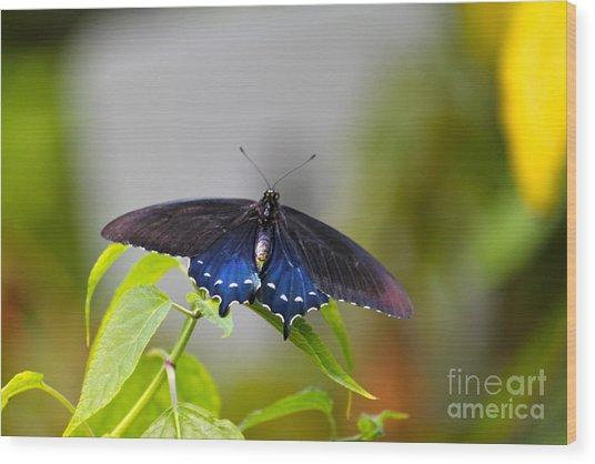 Purple Wings Wood Print