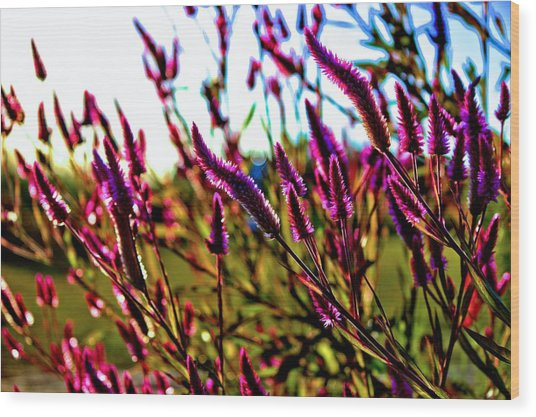 Purpleness Wood Print