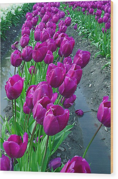Purplepassion Wood Print
