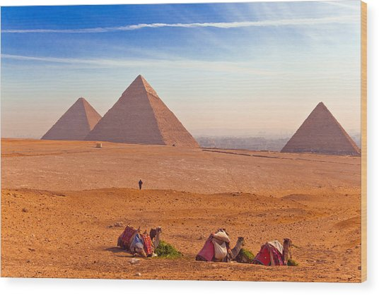 Pyramids And Camels Wood Print